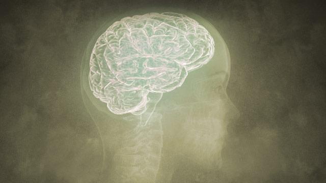 Blueprint for the Brain