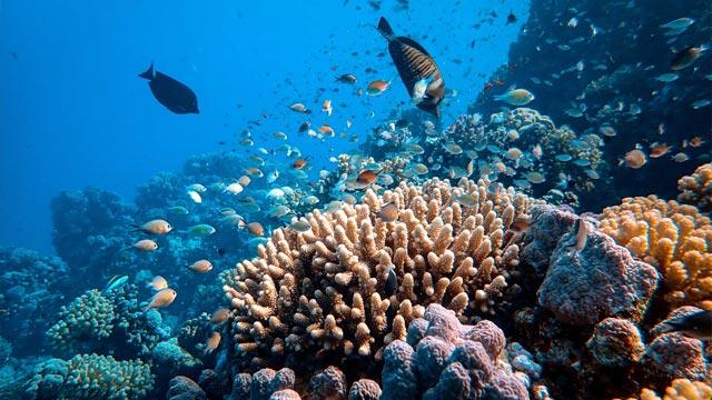 A Search Beneath the Sea